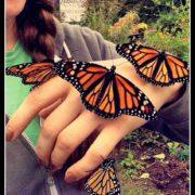 40-monarchs-Kassies-hand-180x180